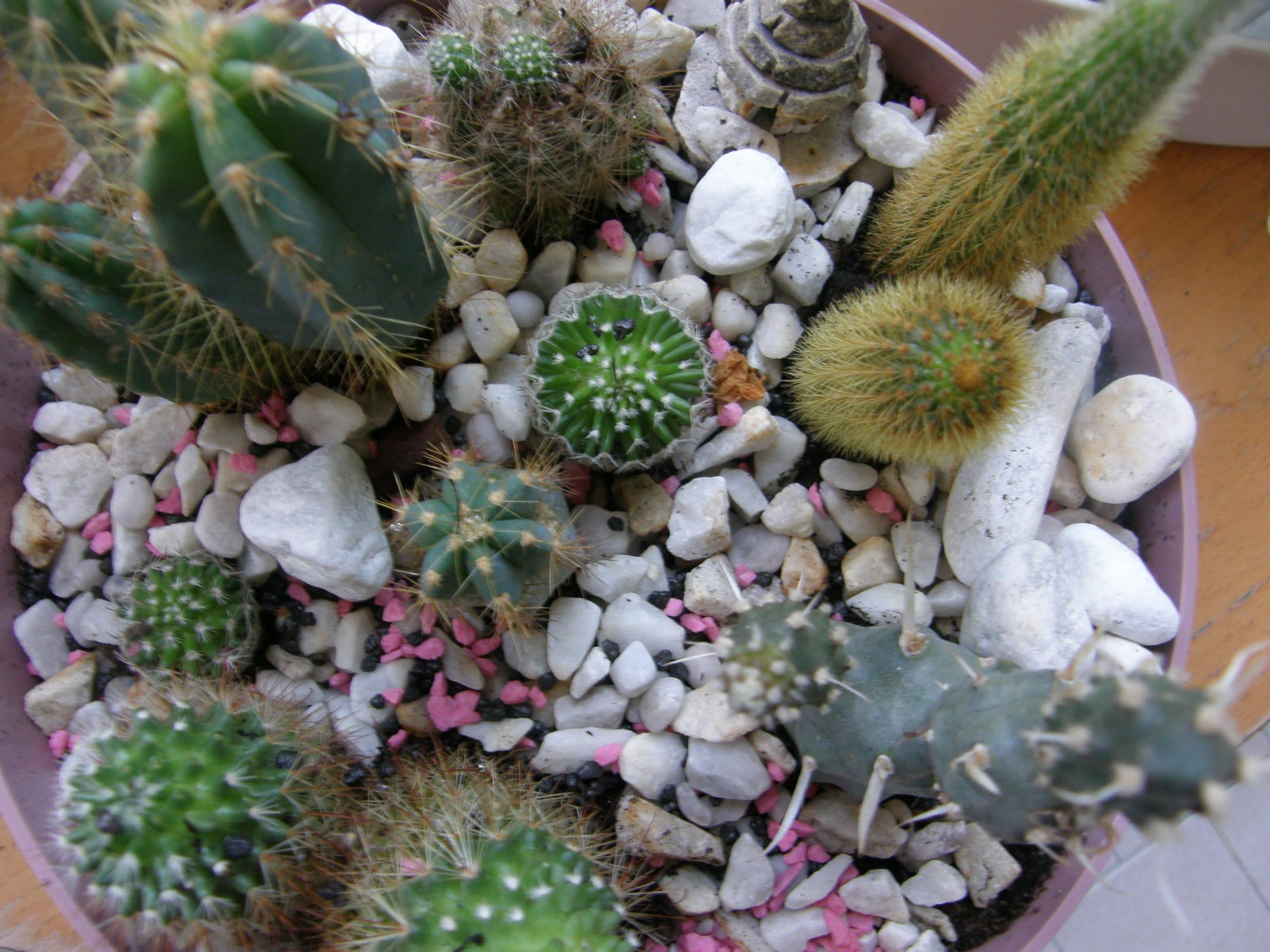 cactus composizione