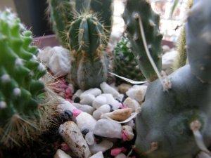 idee mix cactus