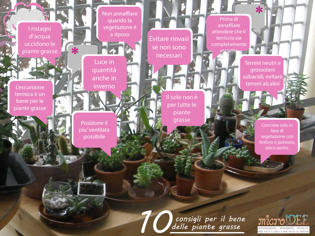 Microidee per macroprogetti for Tutte le piante grasse