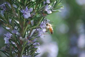 insetto al lavoro in primavera