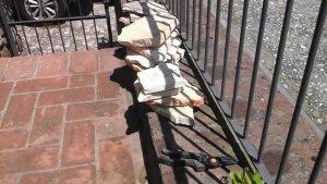 succulent rock garden sassi