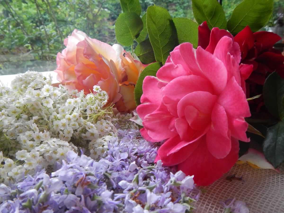 potpurri rose